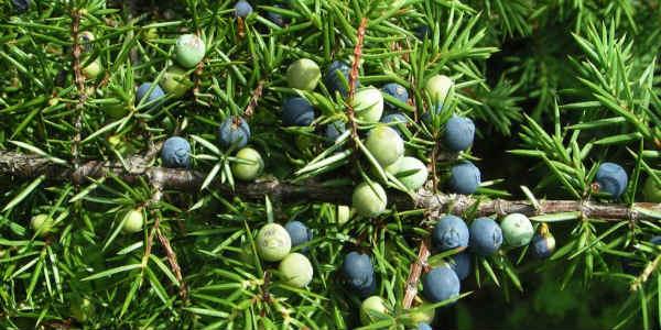 9 дідівських способів захиститися від комах в городі