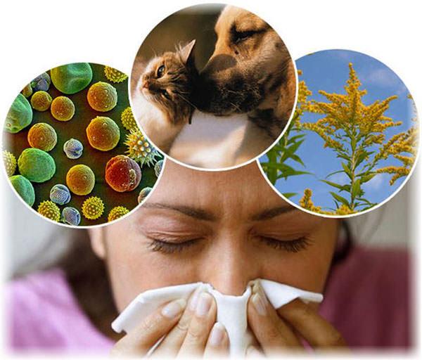 Алергічний риніт у дитини: симптоми і лікування