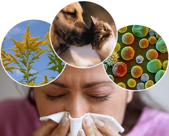 Алергічний синусит як його визначити і усунути симптоми