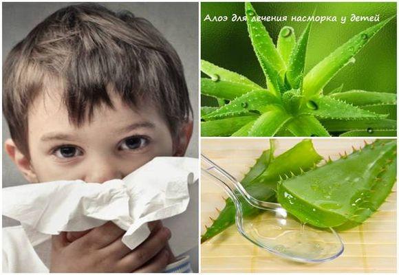 Алое від нежитю: рецепти застосування для дітей і дорослих