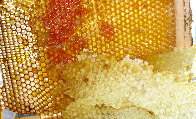 Бджолиний забрус корисні властивості лікування складу