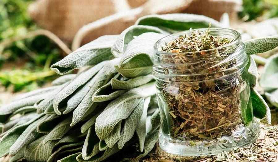 Домашні рослини та продукти, які прибирають мішки під очима
