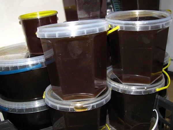 Гречаний мед корисні властивості і протипоказання