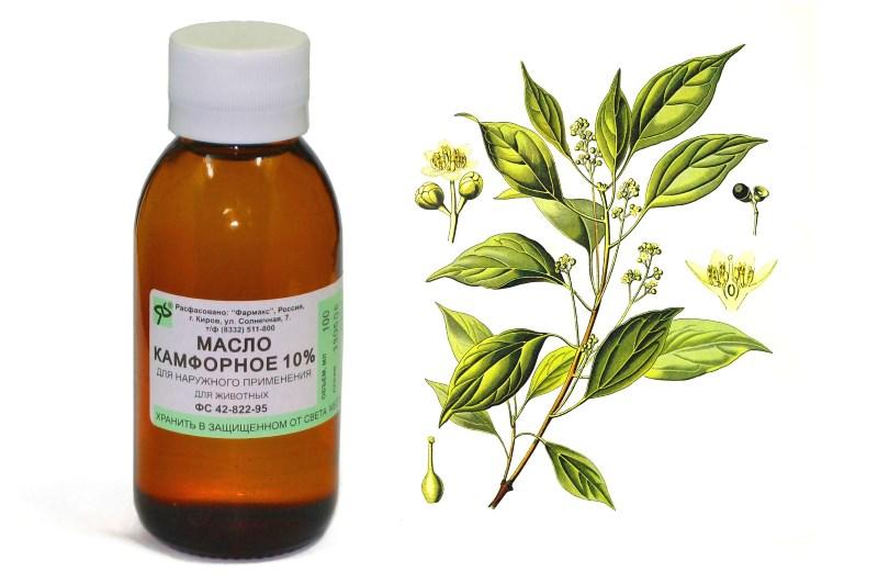 Камфорне масло у вухо застосування при отиті
