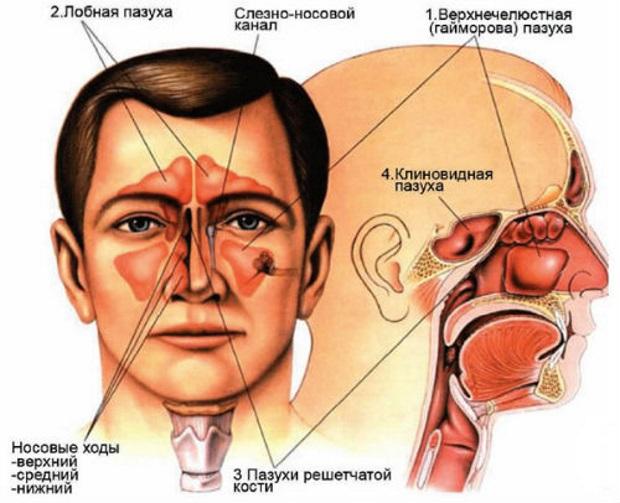 Катаральне явище. Що таке катаральні явища. Як діагностуються катаральні процеси