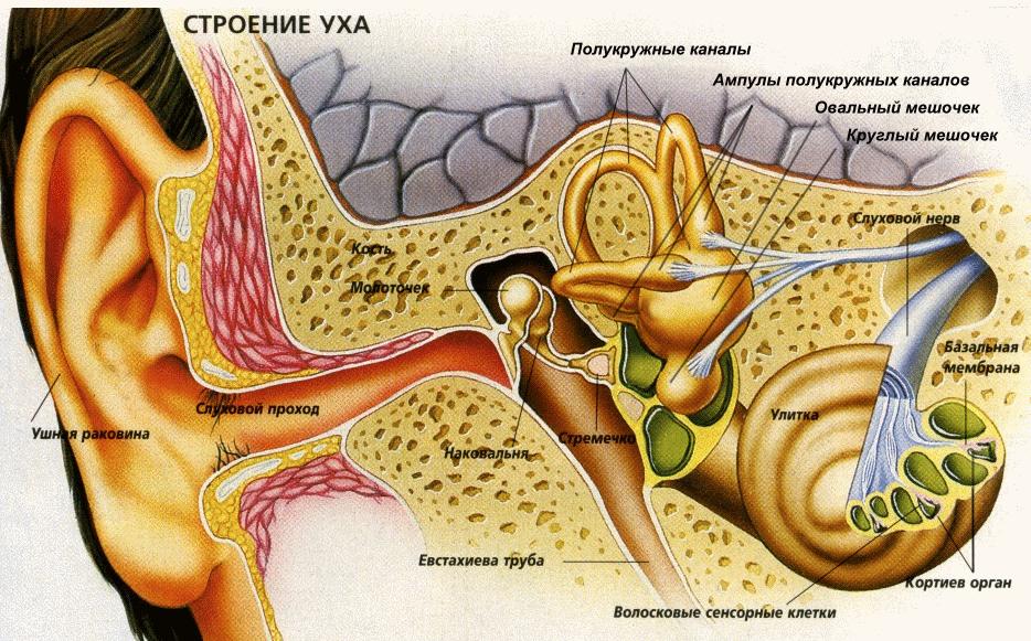 Лікування отиту у дітей, симптоми і лікування гострого хронічного отиту середнього вуха у дитини