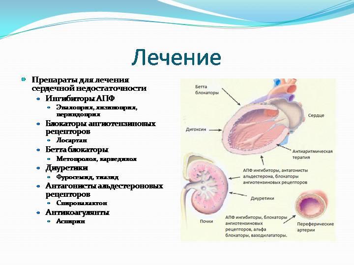 Лікування задишки при серцевій недостатності дихальними вправами, народними засобами, препаратами. Лікування задишки при серцевій недостатності у собак