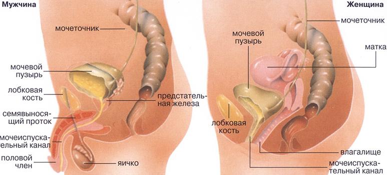 Лікування захворювань сечостатевої системи