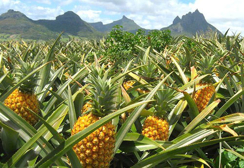 Маски з ананасом