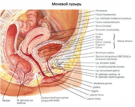 Нейрогенний сечовий міхур у дитини 3 років лікування