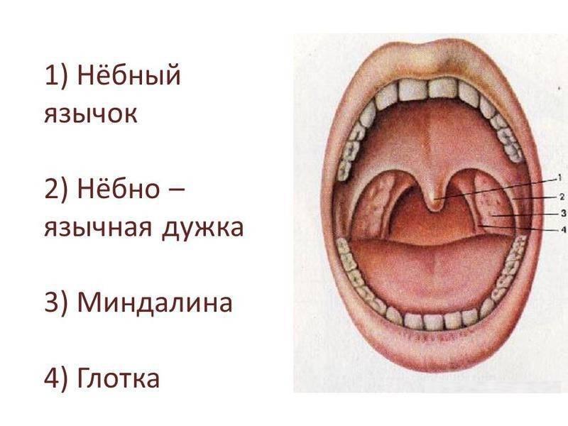 Опух язичок у горлі і збільшився