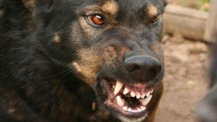 Що робити, якщо вкусив собака? рекомендації від лікарів