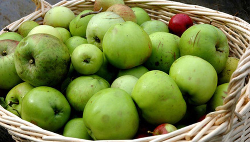 Яку користь дають шкірі незрілі яблука?